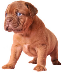 Pro Pac Large Breed Puppy